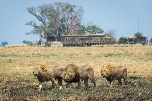 Wilderness Safaris Shumba Camp, Mufumbwe