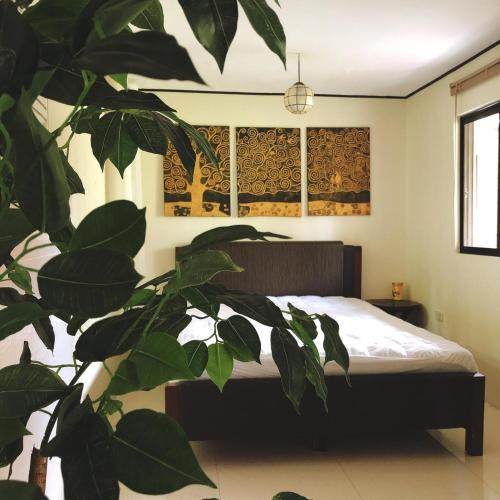 Amadeostays, Indang