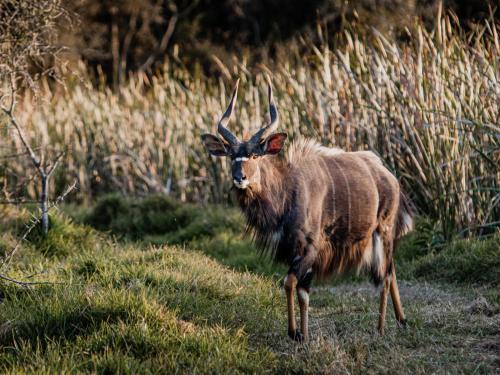 Mount Gulu Reserve, Buffalo City
