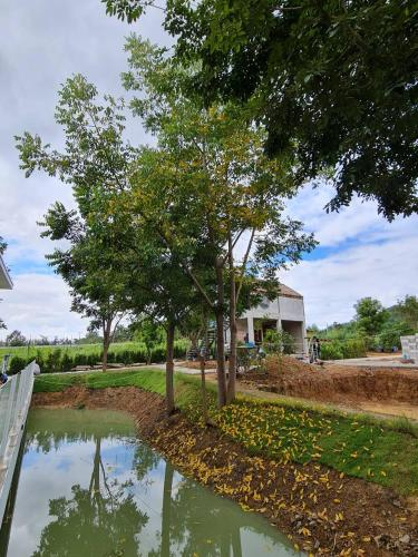 Baan Demonte Suanphueng, Suan Phung