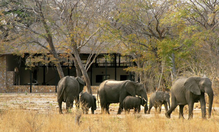 Gwango Elephant Lodge, Hwange