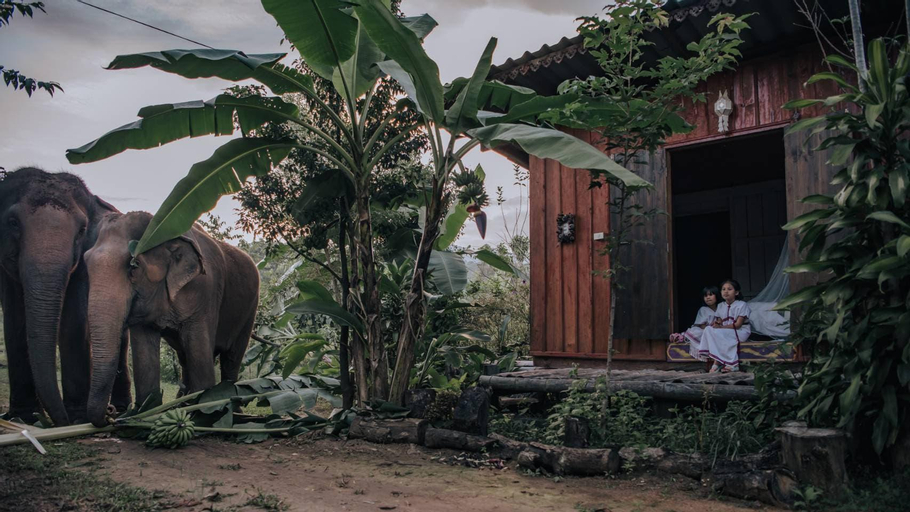 Nongtao cabin farmstay, Mae Wang