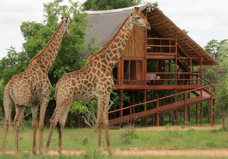 Pezulu Tree House Lodge, Mopani