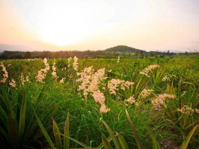 Baanrai Areeya, Suan Phung