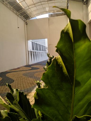 Edelweiss Homestay, Malang