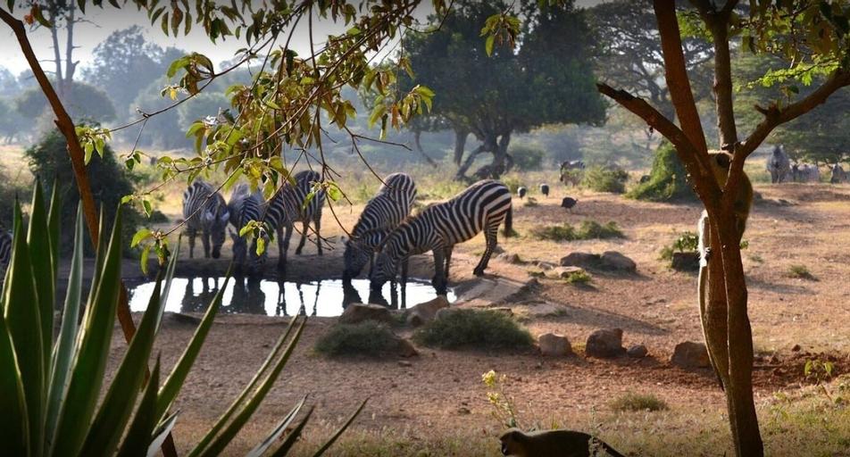 Maralal Safari Lodge, Samburu West