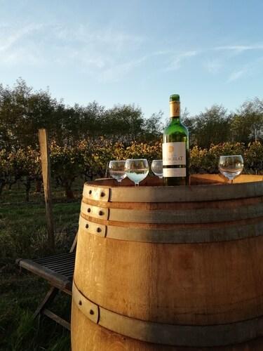 Les Vignes Reines, Gironde