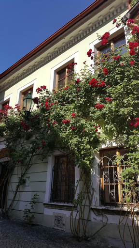 HOUSE OF ROSES, Kutná Hora