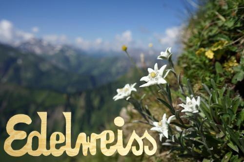 Edelweiss - Bayerischer Hof, Rheingau-Taunus-Kreis