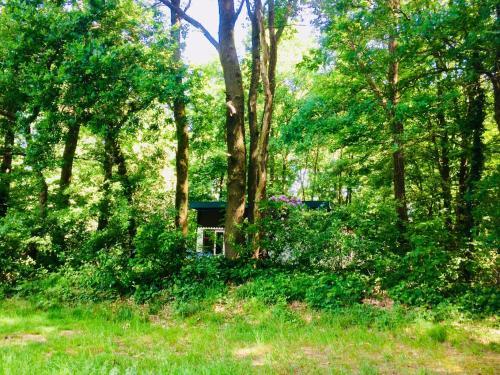 Boshuisje / Forest house, Swalmen
