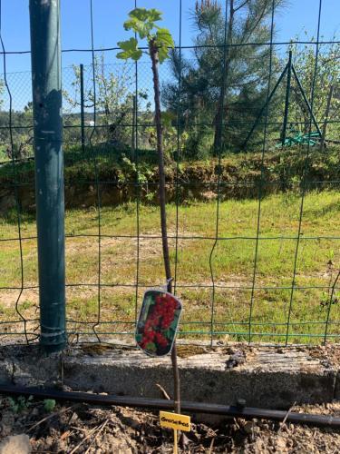 Casa da Xica - Refugio de Campo, Abrantes