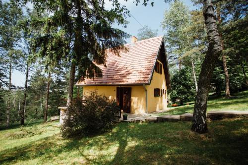 ZiDana Majstorovic, Valjevo