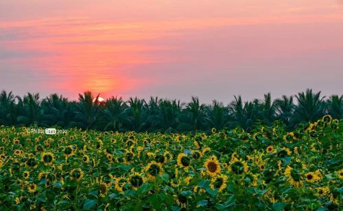 Sky Homestay in Ecopark, Văn Giang