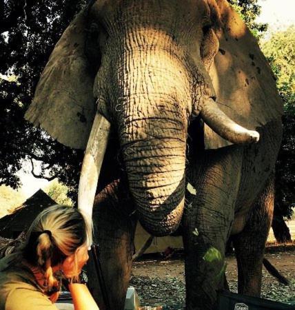 Mwinilunga Safaris, Centenary