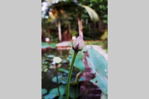 Sum Garden, Huế