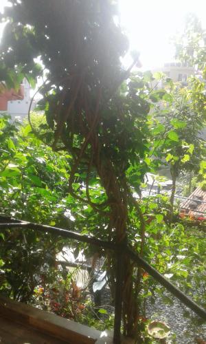 Hotel Forest Zone PVT LTD, Gandaki