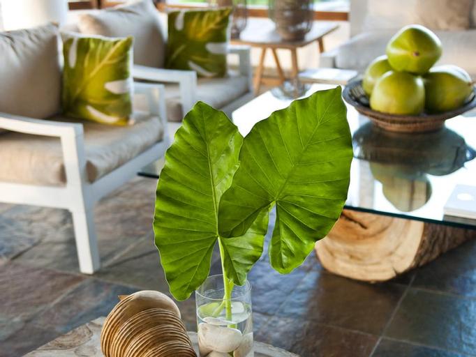 Casa Bonita Tropical Lodge Hotel, La Cienaga