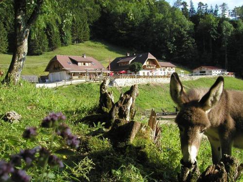 Ferienwohnung Hochsteinalm, Gmunden