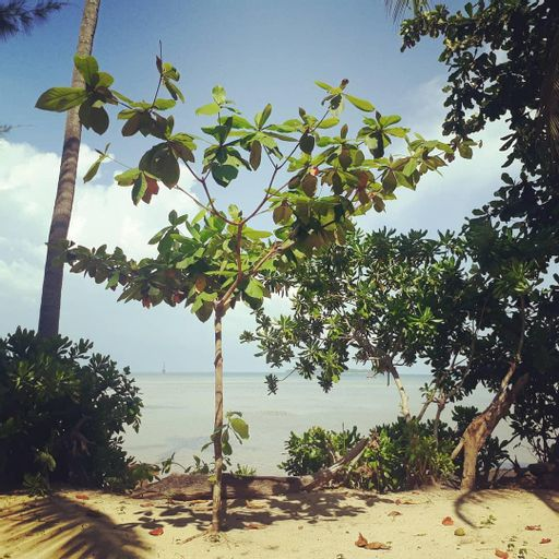 Bunga Jabe Beach, Jepara