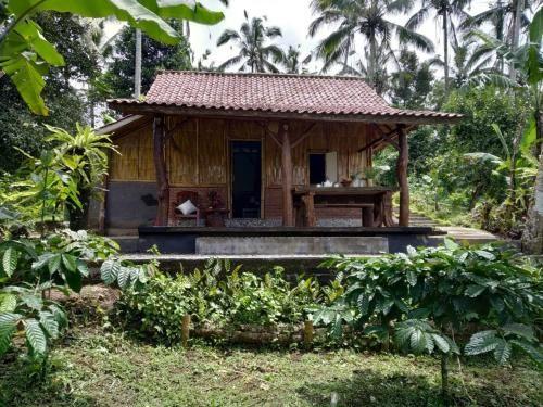 Bali mountain forest cabin, Tabanan