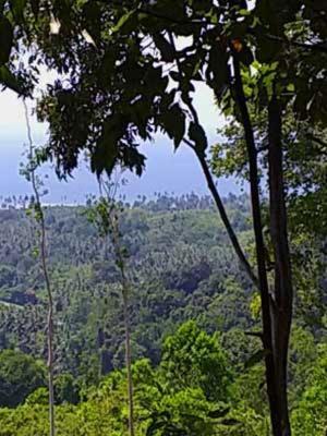 Bogani-Homestay, Bolaang Mongondow
