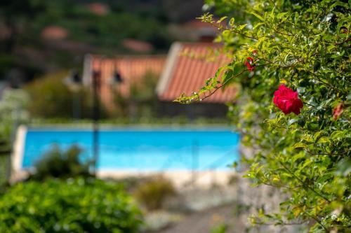 Quinta das Vinhas, Calheta