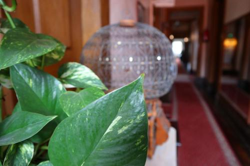 Alegre Hotel, Mealhada