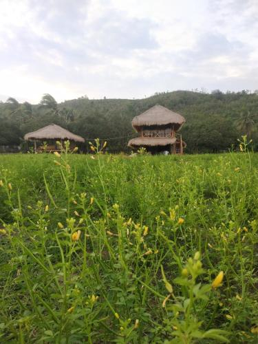 The Bebaleq Bangko Bangko, Lombok