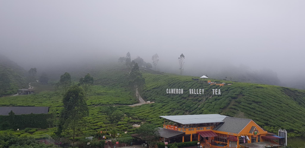 Peony Square Tea view @KualaTerla CameronHighlands, Cameron Highlands