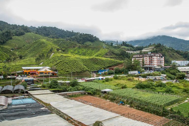 cozy tea view(green), Cameron Highlands