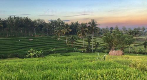 Jungle Roots LOMBOK, Lombok